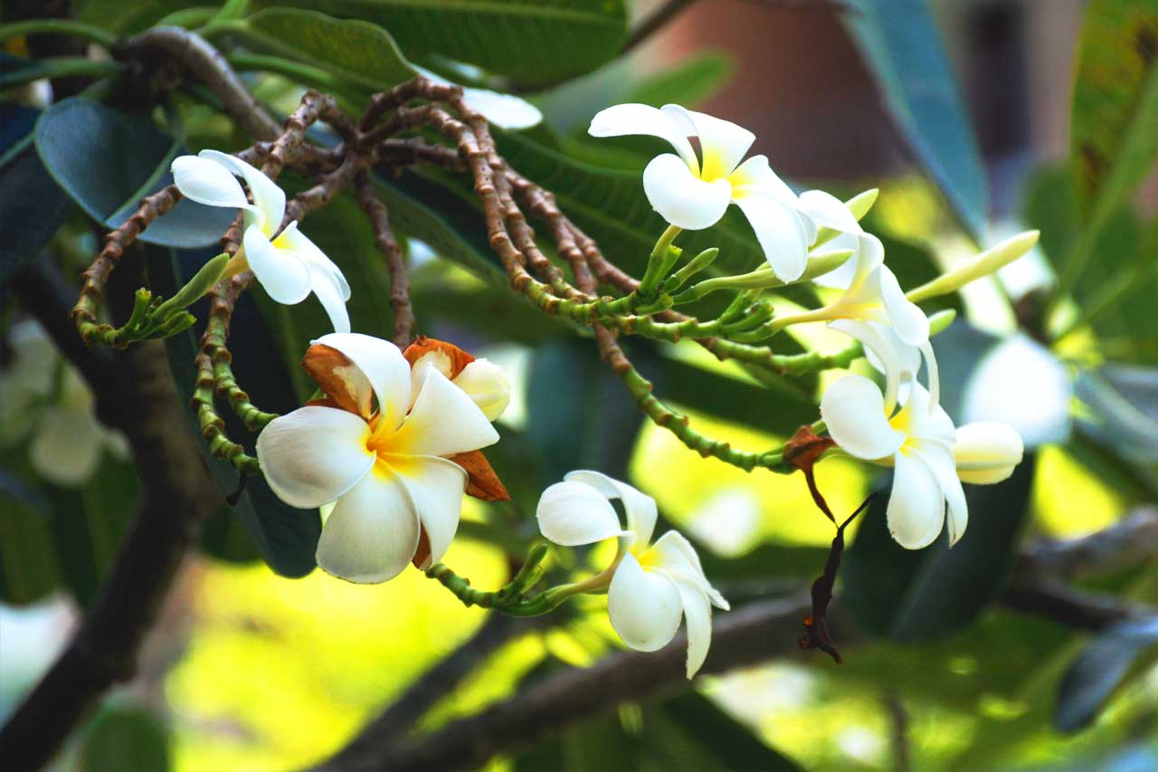 training-paradise-flower